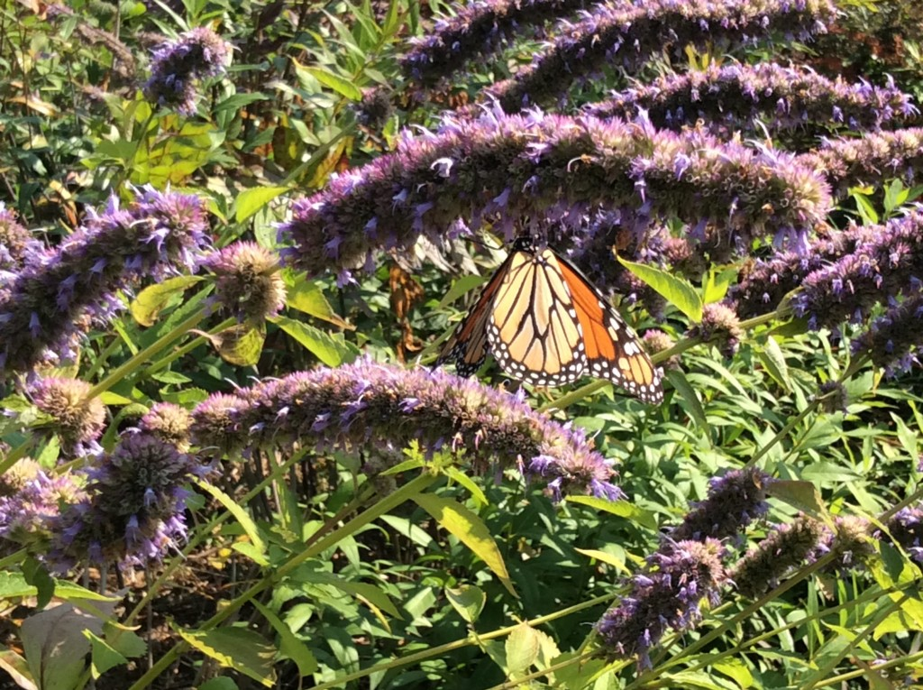 Butterfly in Chicago