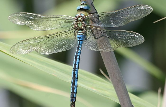 Love, Powdered Donuts, Dragons and Dragonflies | Changing How We See